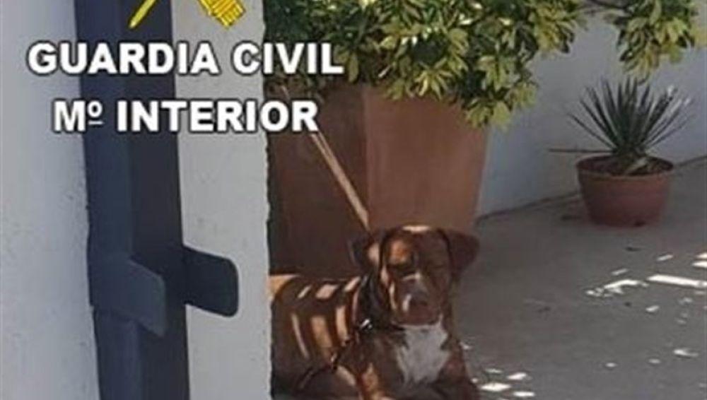 El perro fue abandonado en la Vilavella.
