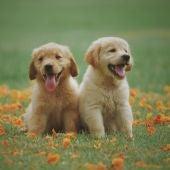 Dos cachorros de perro