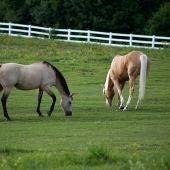 Dos caballos en el campo