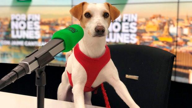 El viaje de Pipper por los rincones dog friendly de España