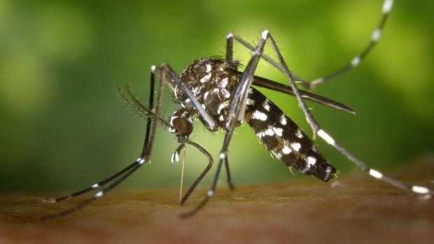 Eureka: El mosquito asesino