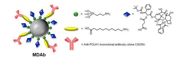 Nuevas nanomedicinas para tratar mejor el cancer de prostata