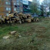 Tala de árboles en el barrio del Pilar