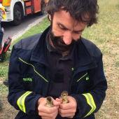 Los bomberos rescatan a dos patitos