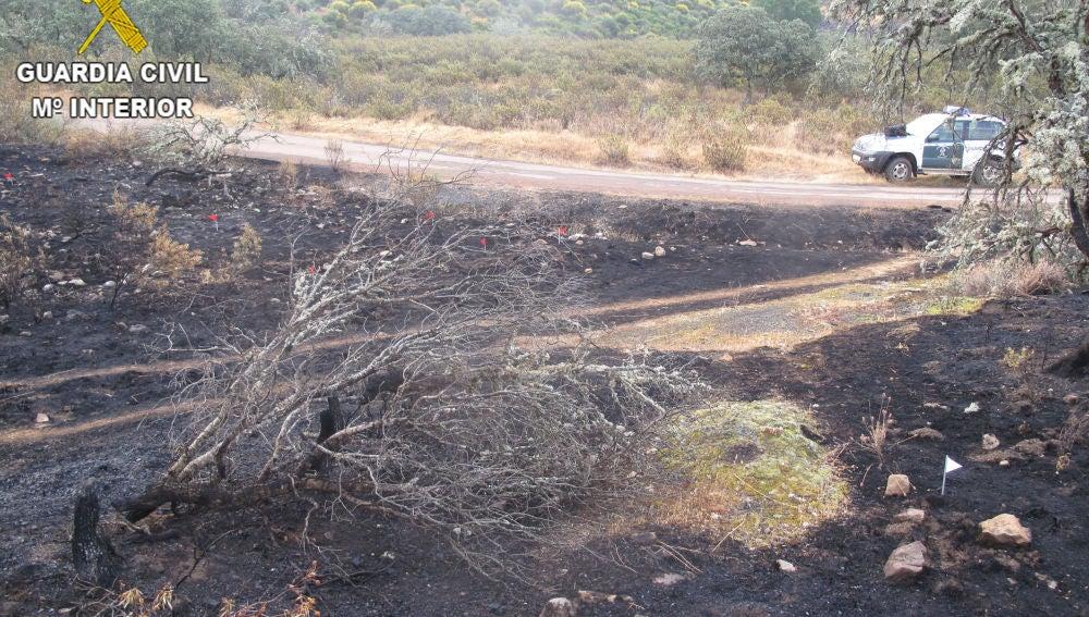 Se incrementa el número de incendios forestales en lo que va de año