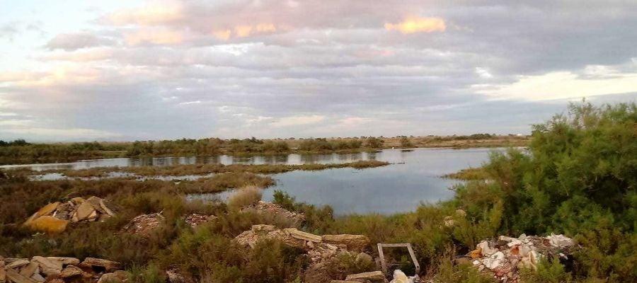 Zona en la que se denuncia la desecación en el parque natural de El Hondo.