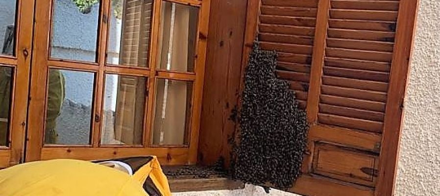 Enjambre de abejas en la ventana de una casa de Elche.