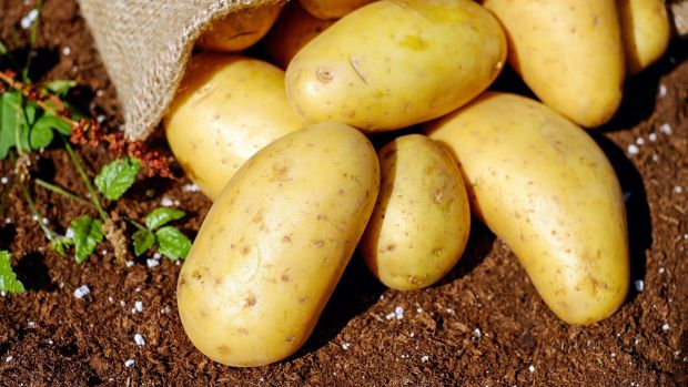 Señales del fin del mundo: El genoma de la patata
