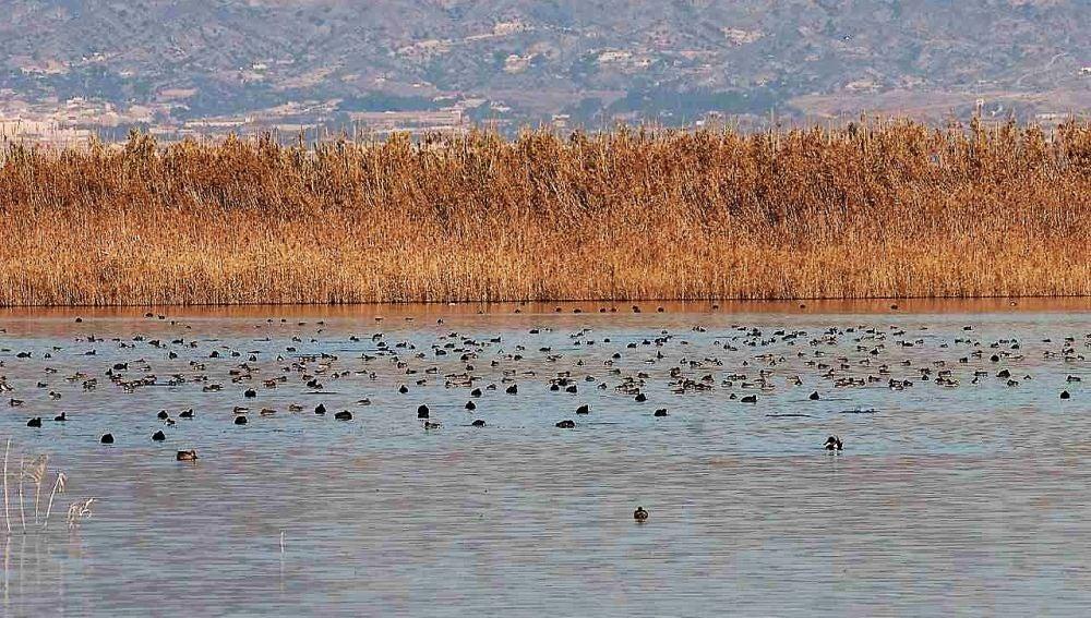 Aves en el Parque Natural de El Hondo en Elche.