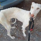 Uno de los perros rescatados por Seprona en Altea
