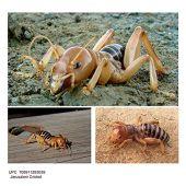 Hormiga típica de Jerusalén