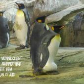 Una pareja de pingüinos homosexuales incuba un huevo en el zoo de Berlín