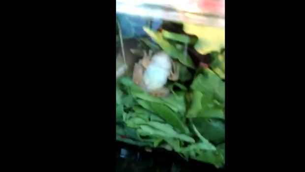 El Vistazo: Una familia de EEUU encuentra una rana viva dentro de su ensalada