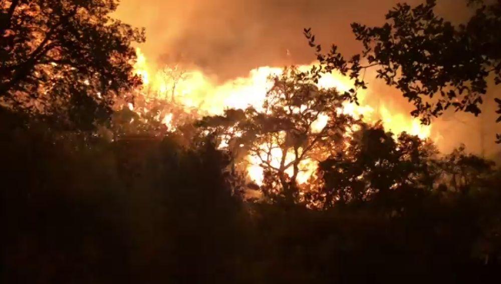 La Policía Nacional detiene a un hombre como autor del incendio de Estepona cuando intentaba quemar una colmena