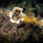 El ancla romana localizada por buzos de burbujas