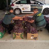 Agentes de la Guardia Civil con parte de la uva robada que se ha recuperado.
