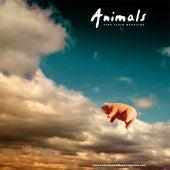 Animals Pink Floyd Magazine