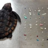 La tortuga fallecida
