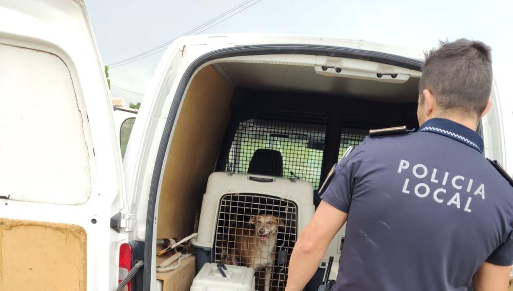 Agente de la Policía Local de Elche junto a algunos de los animales rescatados en Elche.