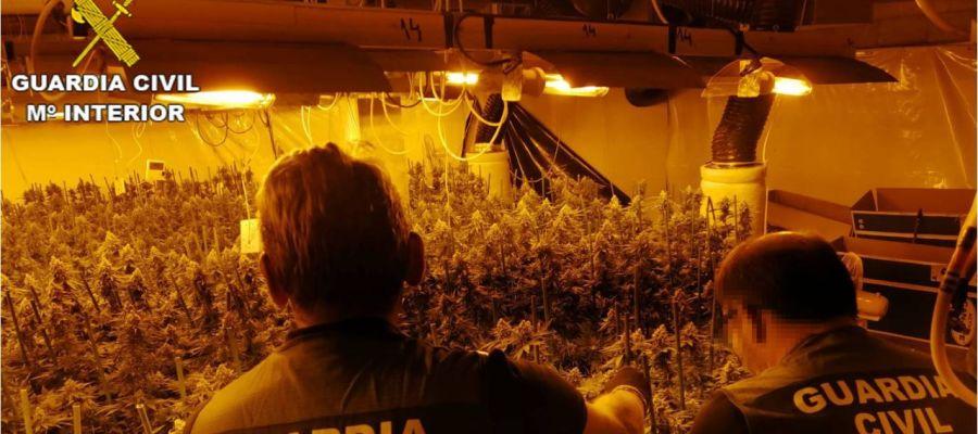 Plantacion de marihuana en chalé de Crevillent.