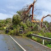 La DANA provoca la caída de 200 árboles en Ibiza.