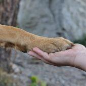 Un cura lleva perros a su Iglesias para que los adopten