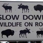 Señal de tráfico de precaución por animales salvajes