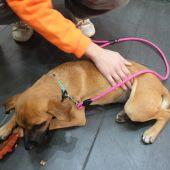 Adopciones de mascotas en Ceuta.