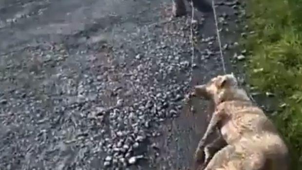 """La presidenta de PACMA, sobre la perra brutalmente atacada en Chantada: """"Este miserable actuó así porque hay impunidad absoluta"""""""