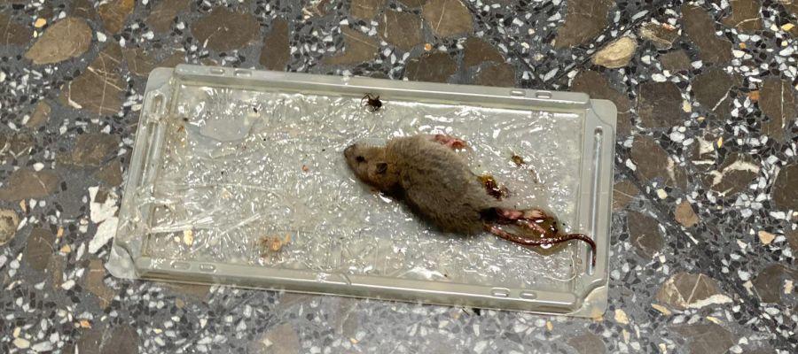 CSIF denuncia la aparición de ratas en el Centro de Salud Constitución.