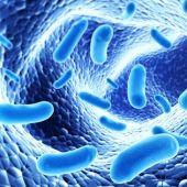 El 70% de los españoles que toman probióticos mejoran su salud intestinal