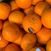 Equipo de investigación - Temporada 11 - Programa 21: SOS Naranjas
