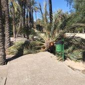Las rachas de viento, de hasta 90 km/h, provocaron la caída de una palmera en el CEIP El Palmeral.