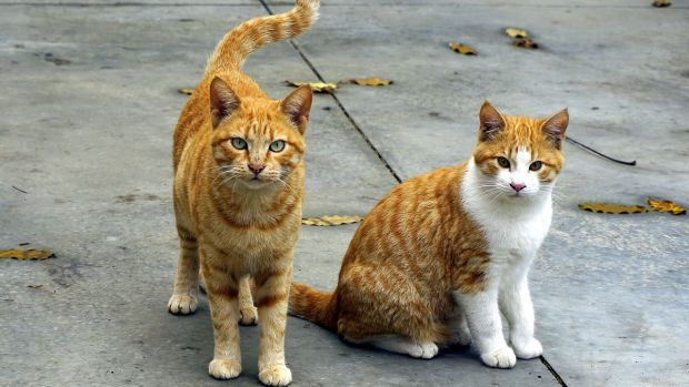 El Consell de Formentera lanza una iniciativa contra el abandono de gatos
