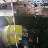 Plantación indoor de marihuana