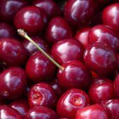 Los agricultores ya están recogiendo las primeras cerezas
