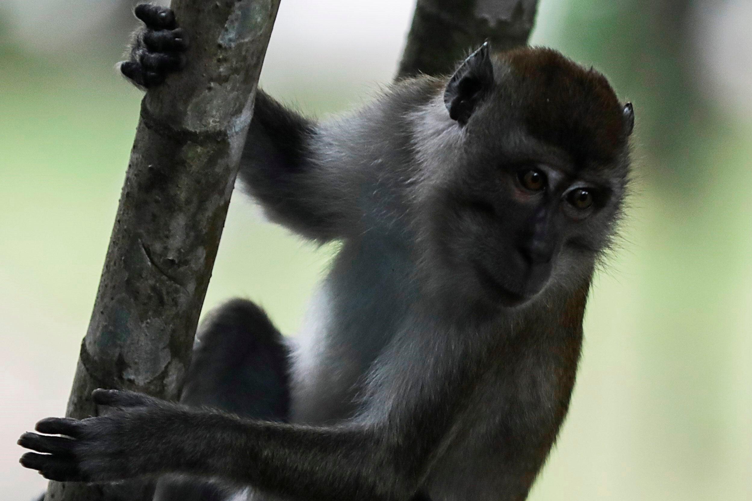 Tertulia Zona Cero: Híbridos mitad mono mitad humano