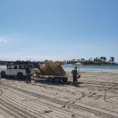 Trabajadores municipales instalando las sombrillas en las playas de Alcudia, para poder reabrirlas a partir del 18 de junio.