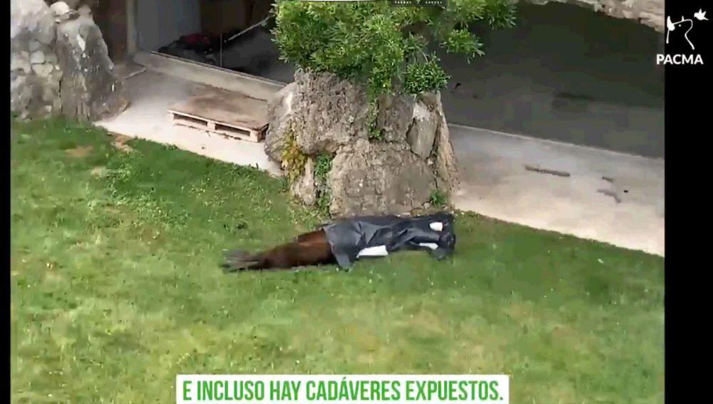Vídeo de Pacma en la que se muestra el cadáver del Léon Marino