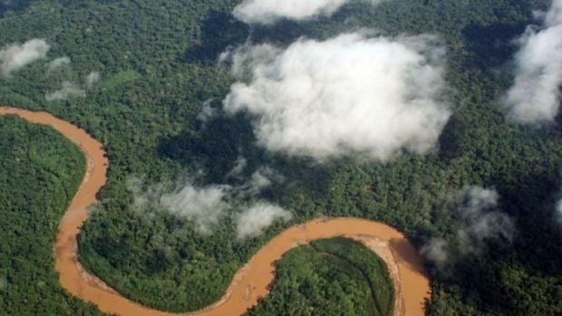 Com d'important és cuidar els arbres del planeta?