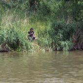 Un hombre cae al Pisuerga donde buscan a un cocodrilo desde hace días