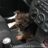Imagen del animal encerrado en el vehículo en el que permaneció cuatro horas