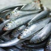 Mas de la mitad de las sardinas y anchoas del Mediterraneo occidental tienen microplasticos en sus intestinos