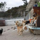 Albergue de perros y gatos