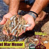 La contaminación en El Mar Menor