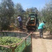Temporeros agrícolas