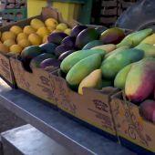 Aguacate, piña o mango, estas son algunas de las mejores frutas tropicales que se pueden encontrar en Mogán (Canarias)