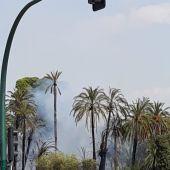 Incendio en Huerto San Luis de Elche.