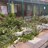 Árbol caído tras la tormenta Bárbara