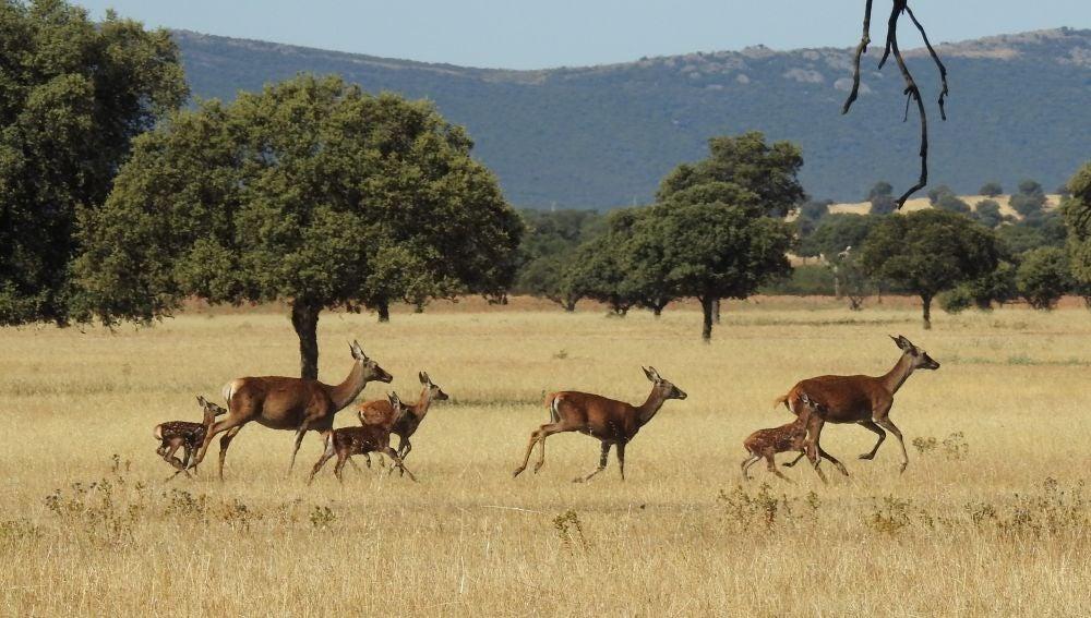 Cabañeros conmemora el 25 aniversario como Parque Nacional